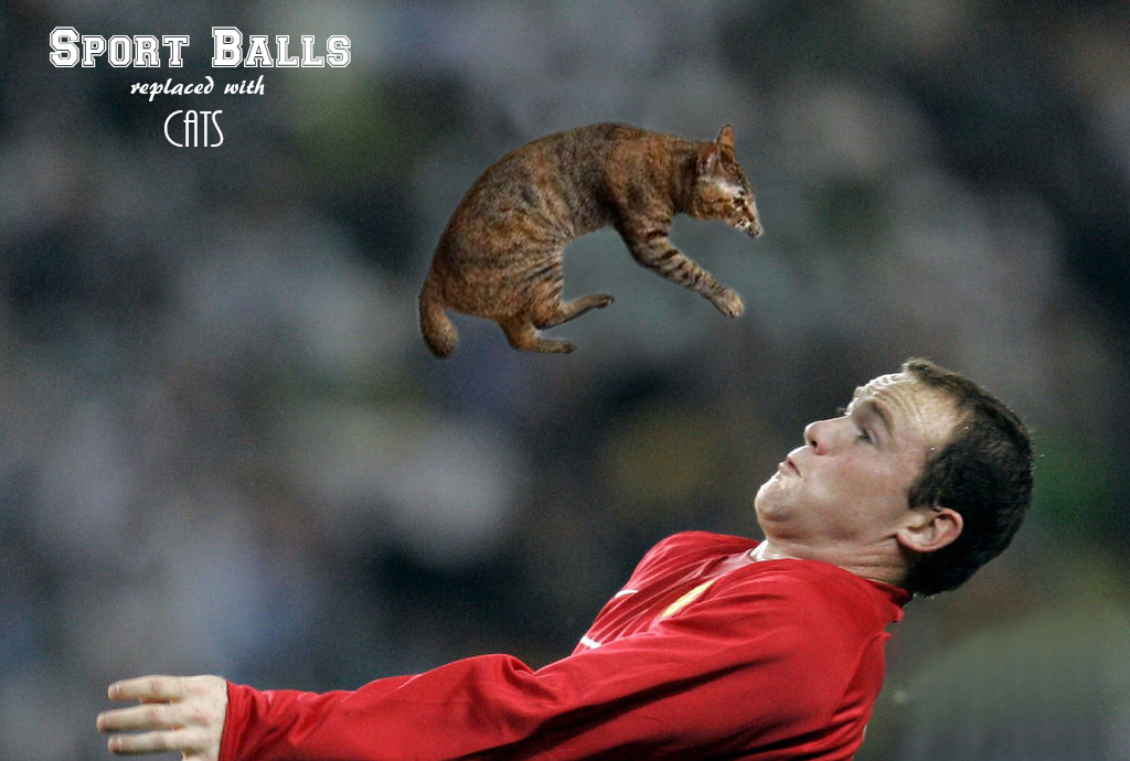 Sports balls replaced with cats