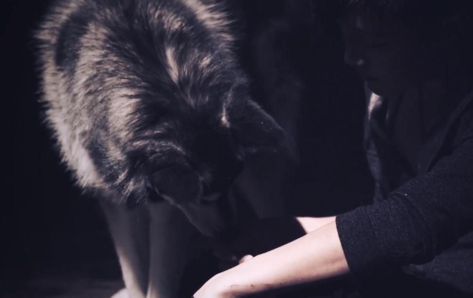 Lion's Den Music Video - Jhameel