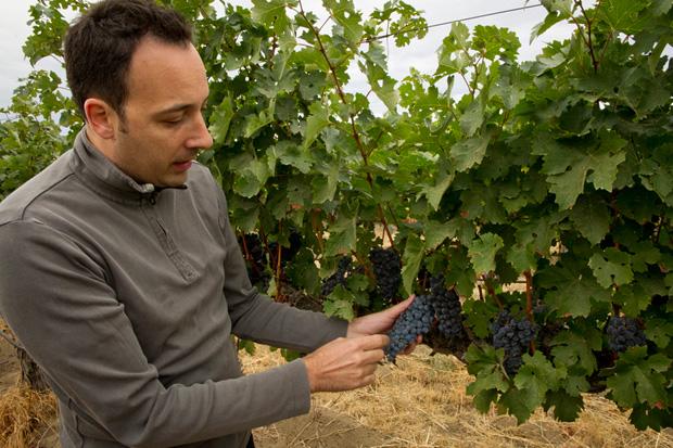 Juan Muñoz Oca examining vines