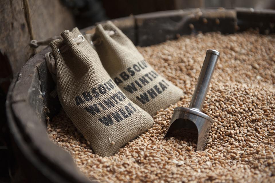 Absolut Winter Wheat