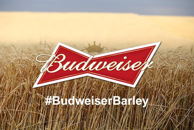 #BudweiserBarley