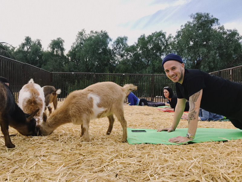 Lavenderwood Farm Goat Yoga