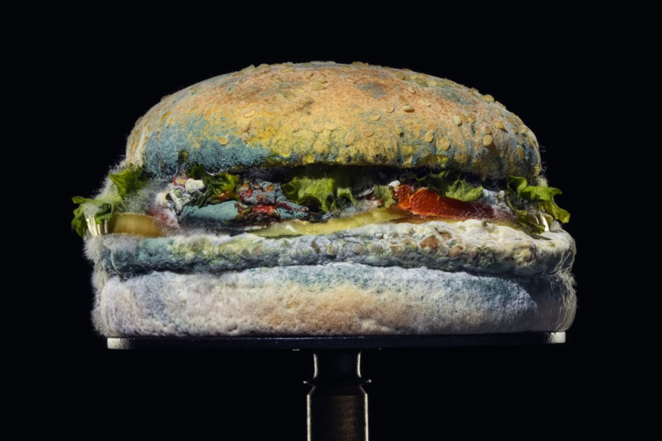 Here's What a Moldy Burger King Whopper Looks Like