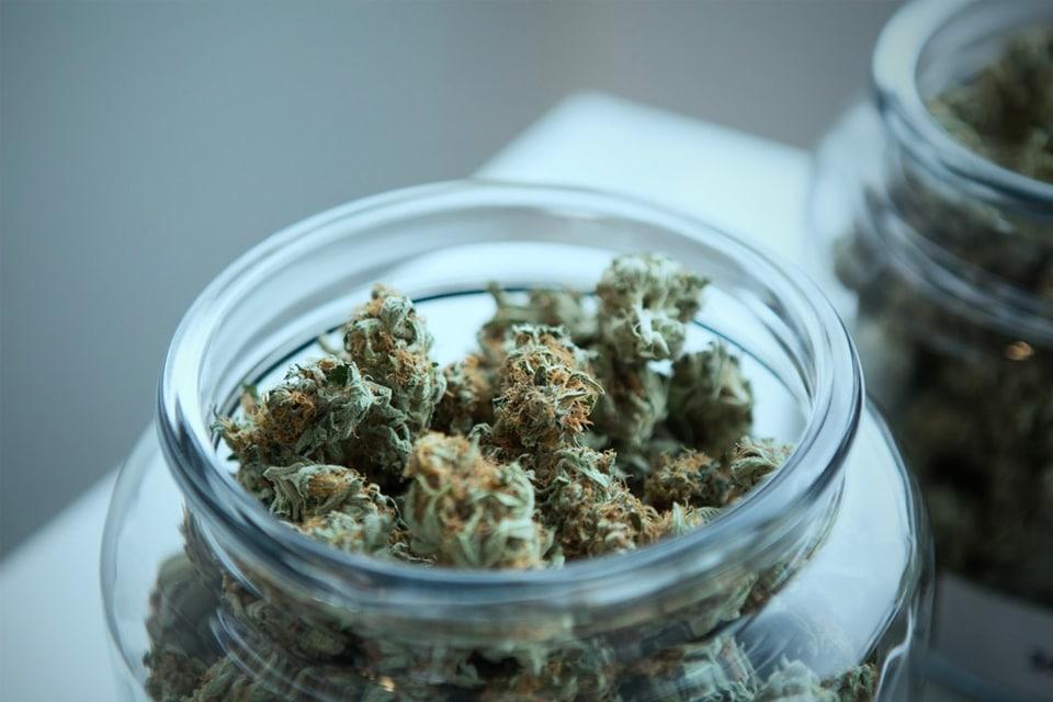 Learn how to grow cannabis